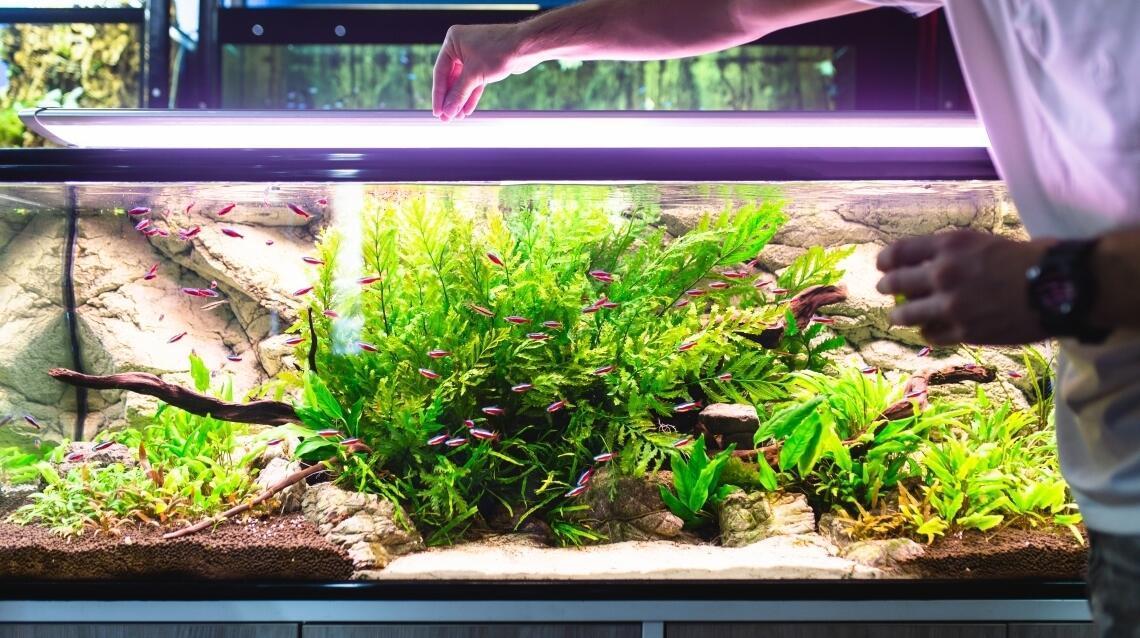 Pokrywa do akwarium z plexi – tania i wygodna alternatywa dla szkła!